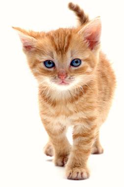 Offerte di lavoro pet food: scopri il lavoro nel settore pet food ...